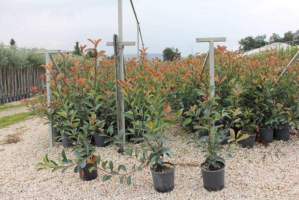 Clicca sulle nostre immagini - Nomi di piante da giardino ...
